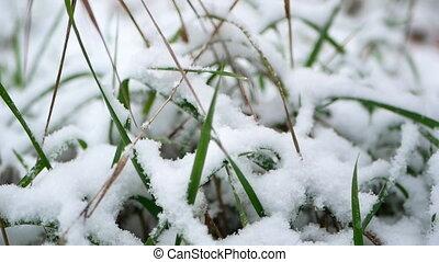 Close up snow grass - Close up shot of snow on a tiny blade...