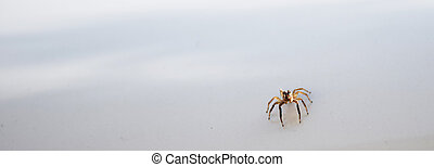 close up spider on white background.