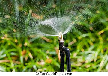 close up watering black sprinkler