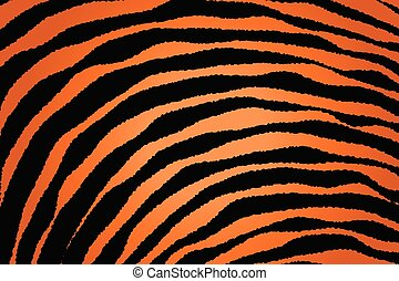 Close up Stripe Animal Pattern