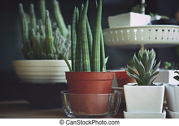 close up succulent in white pot against black background