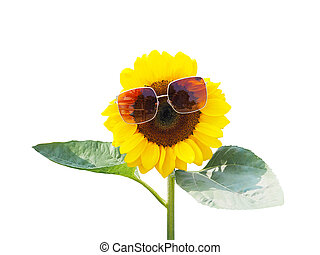 sunflower with sunglasses and green leaves isolated on white background.