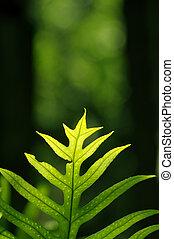 close up super macro fern leaf