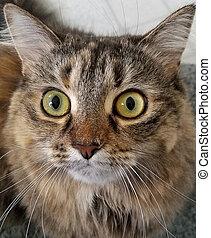 close up tabby cat portrait