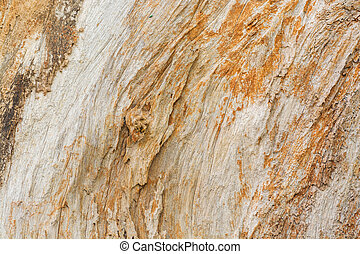 Close up Texture Background of Tree Trunk