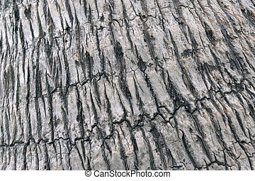 close up texture of coconut