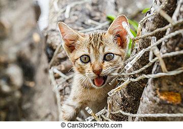 Thai cute naughty cat