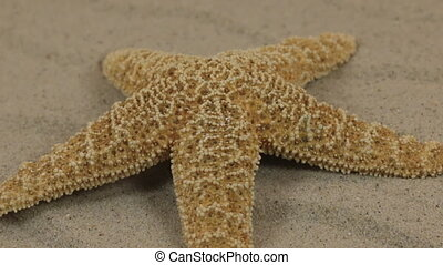 Close-up, the rotation of the starfish lying on the sand dunes.