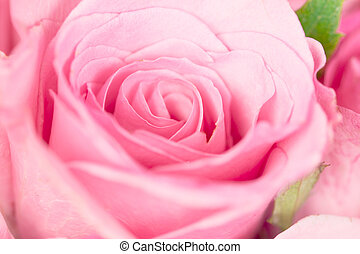 close up the sweet light pink on pink abstract lighting background  for love and romace concept