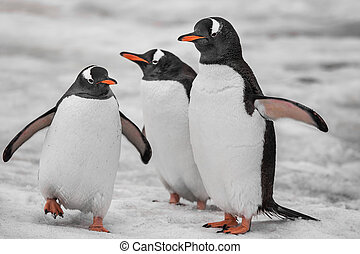 Close-up three penguins . Antarctic mountains.
