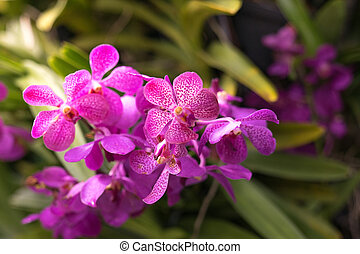 close up top view of wild pink orchid flowers