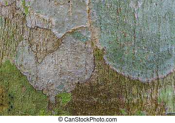 Tree bark texture with moss and lichen