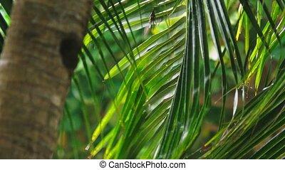 close-up. Tropical rain, season of precipitation. Rain on...