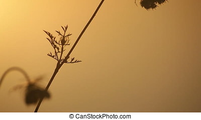 Close Up Twilight Backlit Wild Plants Silhouette Pan - Close...