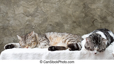 Close up two cute tabby cats sleep on white background