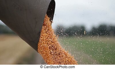 Close up unloading a bumper crop of corn - Close up view of ...