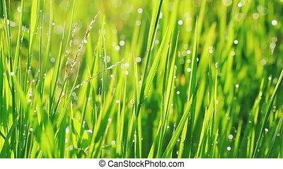 video of beautiful green grass