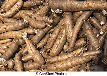 close-up, vietnamees, tapioca, field., wortels, bos