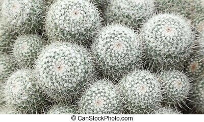 Close-up view at succulent cactus - Close-up view at grey...