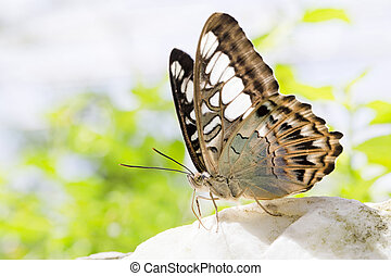 Close-up view of a beautiful butterfly