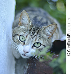 close-up view of a cat