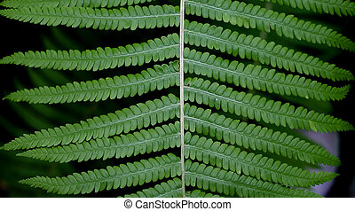 Close up view of a green leaf of fern in the garden on a dark background.