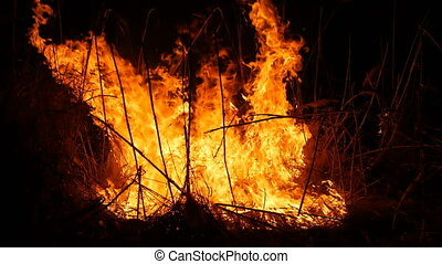 Close up view of a terrible dangerous wild fire at night in...