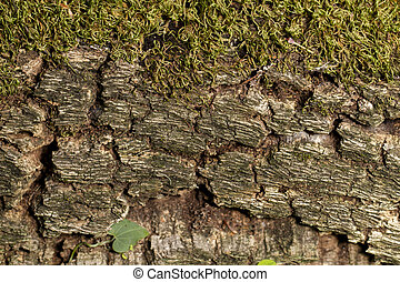 tree bark with moss texture