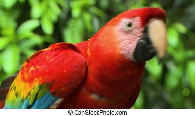 Close-up view Of Ara Macao Parrot, Manu, Peru - Extreme ...