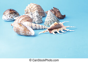 Close up view of big sea shell on plain blue background