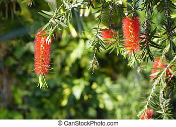 close up view of bottle brush flower