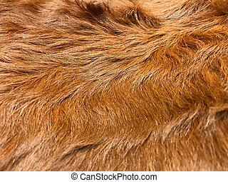 Close up view of brown cow fur, real genuine hair texture