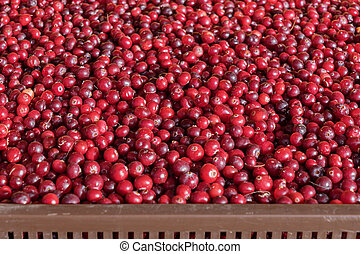 Close up view of cranberry berry in box on farmers market