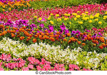 Close-up view of flower bed