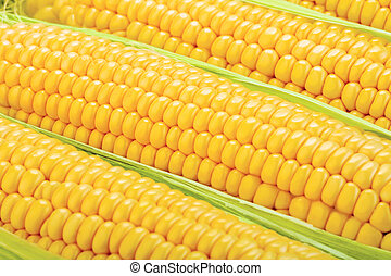 close-up view of fresh corn