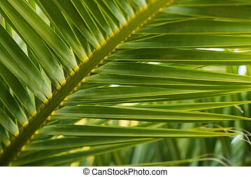 Close-up view of fresh green palm tree leaf