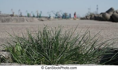 Close up view of grass growing on concrete