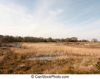 close up view of lake golden reeds nature landscape reserve