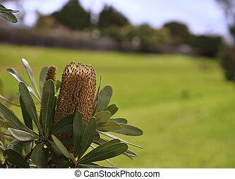 Lemon Bottle-brush Flower