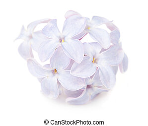 Close up view of lilac flower