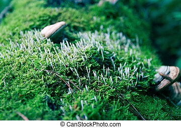 Close up view of moss and wood mushrooms on old fallen tree in forest