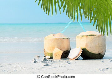 Close up view of nice fresh coconut in tropic