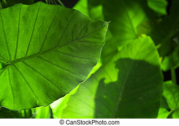 close up view of nice fresh leaf on
