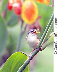 Close up view of nice little bird