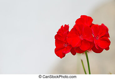 Close-up view of red flower.