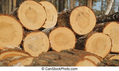 Close up view of sawn timber on sawmill.