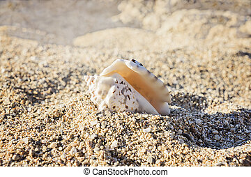 small spotted seashell lying on the sand