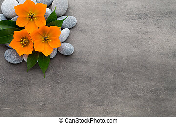 Close up view of spa theme objects on grey background.
