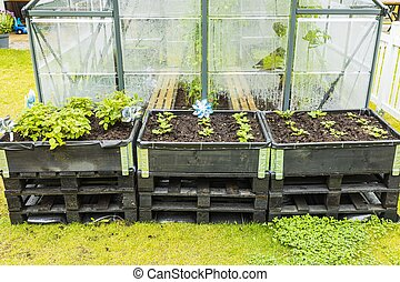 Close up view of strawberry plants in garden boxes on greenhouse background.