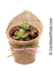 succulent plants on vase